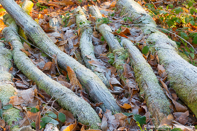 Frosty-moss-covered-logs