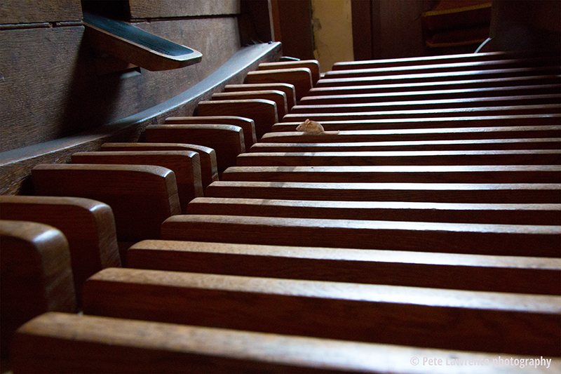 Mouse-and-Church-organ