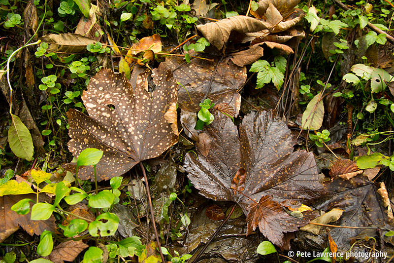 autumn-leaves-in-the-grass