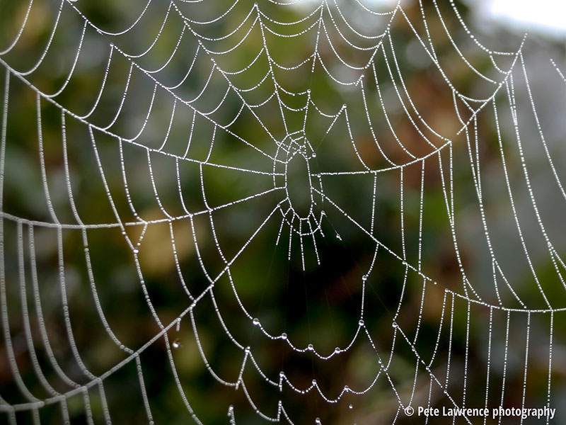 dew-on-a-spiders-web
