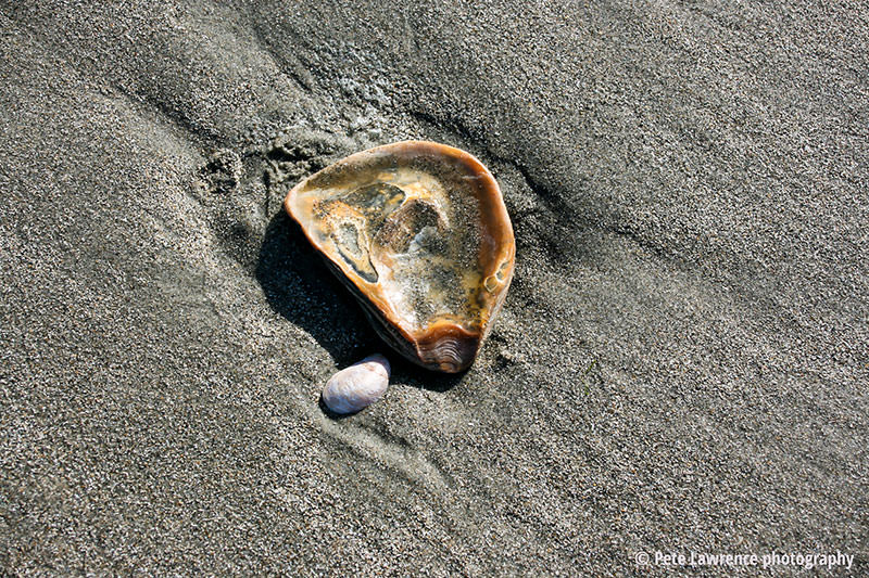 shells-in-the-sand-whittering-bay